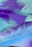 蓝色,绿色和紫色工艺用羽毛装饰背景 免版税图库摄影