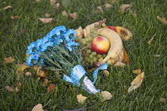 蓝色延命菊和果子。 免版税库存照片
