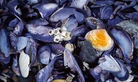 蓝色贻贝和眼镜 免版税库存图片