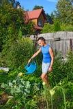 蓝色给圆白菜喝水的年轻人浇灌在庭院里  图库摄影
