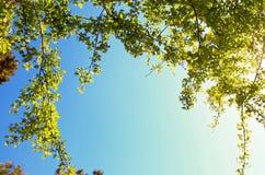蓝色晴朗的天空绿色叶子框架 免版税图库摄影