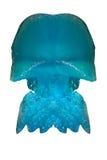 蓝色水母昆士兰 免版税库存图片