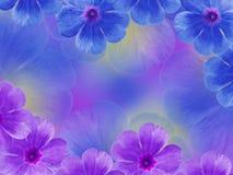 蓝色紫色紫罗兰花 背景美丽的刀片花园 特写镜头 对于设计师, 图库摄影