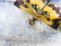 蓝色蜻蜓 库存照片
