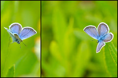 蓝色蝴蝶拼贴画 免版税库存图片