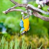 蓝色&金金刚鹦鹉纵向 库存图片