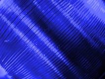 蓝色cds 库存照片