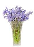 蓝色Hyacinthus orientalis在一个透明花瓶,关闭开花(共同的风信花、庭院风信花或者荷兰风信花) 免版税库存图片