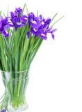 蓝色irise开花在花瓶的诗句 库存图片