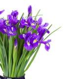 蓝色irise开花花束 库存图片