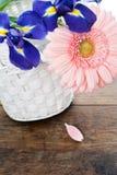 蓝色irisis和桃红色大丁草雏菊花 免版税库存图片