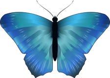 蓝色morpho蝴蝶,传染媒介 库存图片