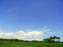 蓝色ricefield天空 免版税库存图片