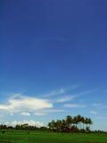 蓝色ricefield天空 免版税图库摄影