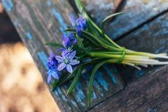 蓝色snowdrops美丽的花束在一张木桌上的 库存照片