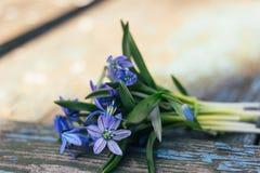 蓝色snowdrops花束在一张织地不很细木桌上说谎 免版税库存图片