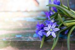 蓝色snowdrops花束在木背景的 库存照片
