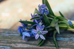 蓝色snowdrops花束在织地不很细木背景说谎 免版税库存图片