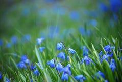 蓝色snowdrops 免版税库存图片