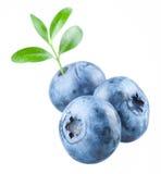 蓝莓。与叶子的三个越桔在白色 免版税库存图片