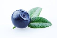 蓝莓。与叶子的越桔在白色 图库摄影