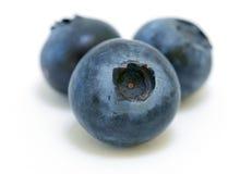 蓝莓三重奏 免版税库存图片
