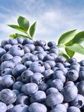 蓝莓关闭  库存图片