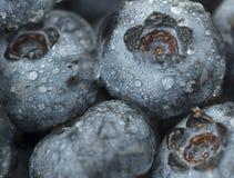 蓝莓关闭  免版税库存图片