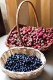 蓝莓和在篮子的野生浆果 库存图片