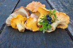 蓝莓和狂放的蘑菇 免版税库存图片