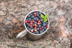 蓝莓和红色美洲越桔 免版税库存照片