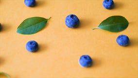 蓝莓和绿色叶子在桃红色背景 电影蓝莓4k录影 成熟和水多的新鲜的被采摘的越桔关闭 股票录像