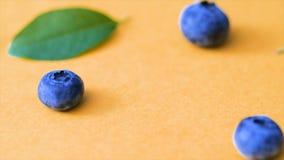 蓝莓和绿色叶子在桃红色背景 电影蓝莓4k录影 成熟和水多的新鲜的被采摘的越桔关闭 股票视频