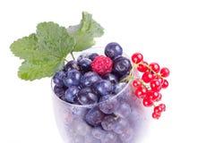 蓝莓和莓在玻璃与叶子 库存照片