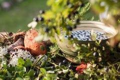 蓝莓和蘑菇 免版税图库摄影