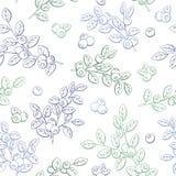 蓝莓图表颜色无缝的样式剪影例证传染媒介 免版税库存图片