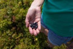 蓝莓在手上 库存图片