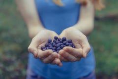 蓝莓在森林新鲜的蓝莓的妇女手上在手上 免版税库存照片