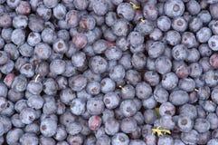 蓝莓堆 免版税库存照片