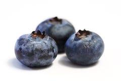 蓝莓宏指令三重奏 图库摄影