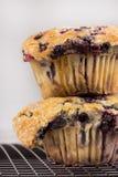 蓝莓庞然大物松饼 库存图片