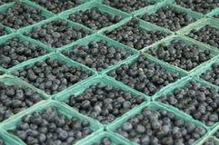 蓝莓抽签全部 库存照片