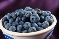 蓝莓断送白色 图库摄影