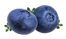 蓝莓新查出的白色 图库摄影