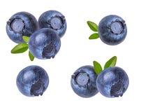 蓝莓新查出的白色 库存照片