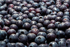 蓝莓新鲜丰盛水多 免版税库存照片