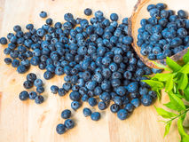 蓝莓新鲜有机 库存图片
