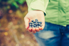 蓝莓新鲜的被采摘的有机食品在妇女手上 免版税库存照片