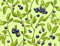 蓝莓无缝的样式 免版税库存图片