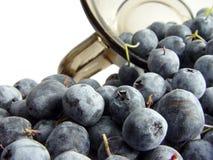 蓝莓杯子 库存图片